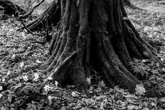 Wald... I
