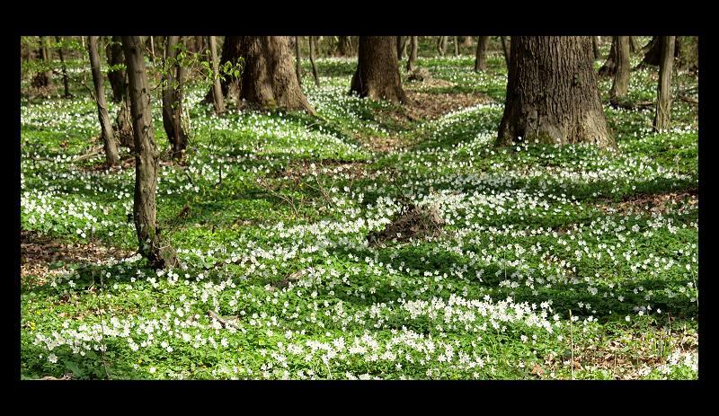 Wald I...