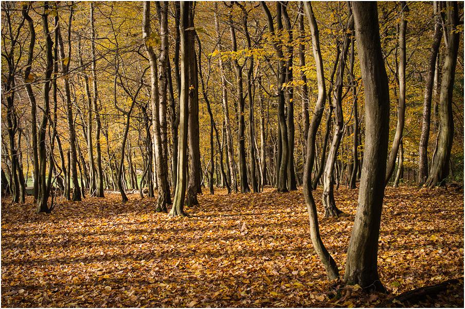 Wald II