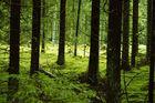 Wald III