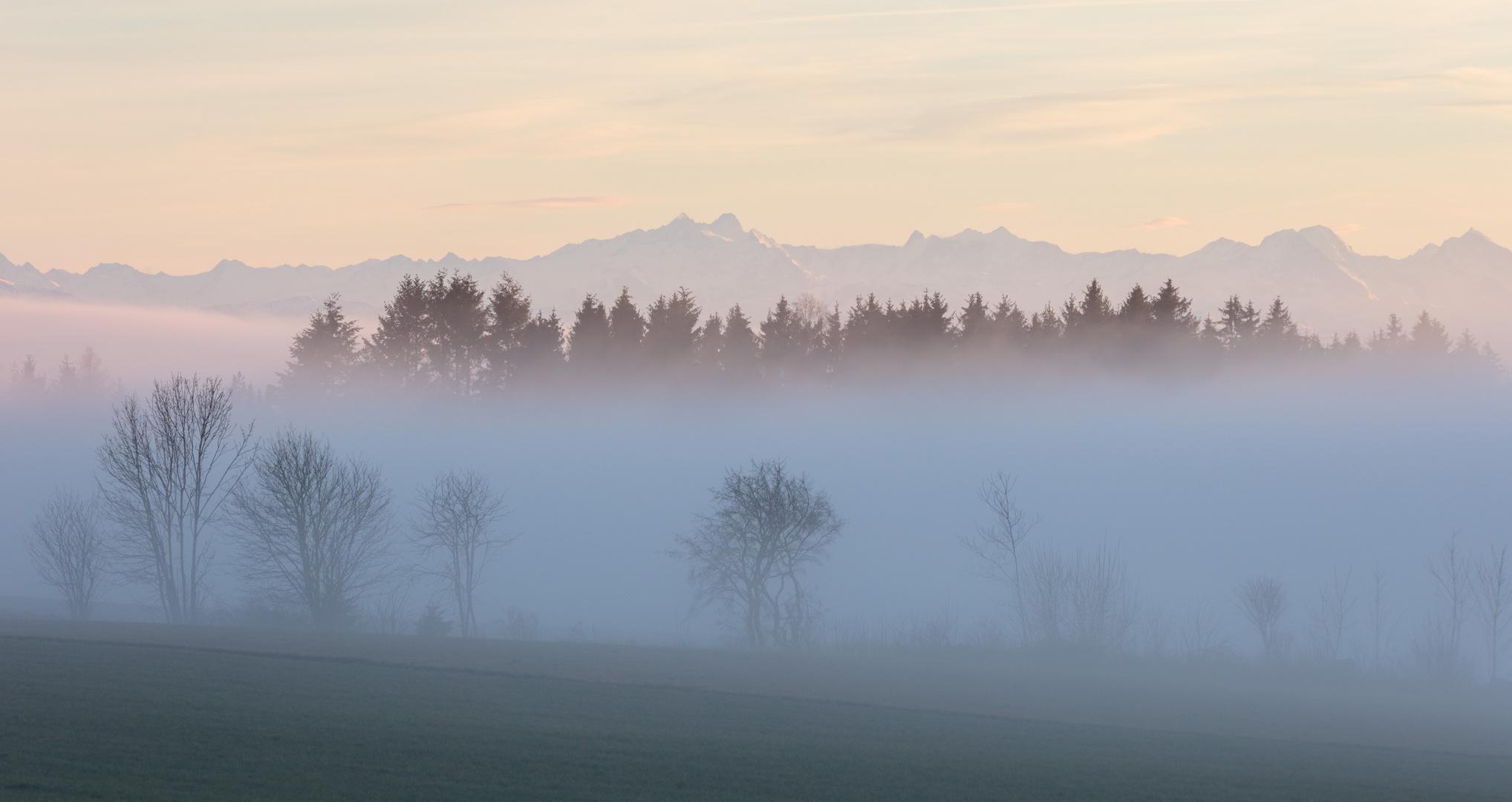 Wald im aufsteigenden Nebel