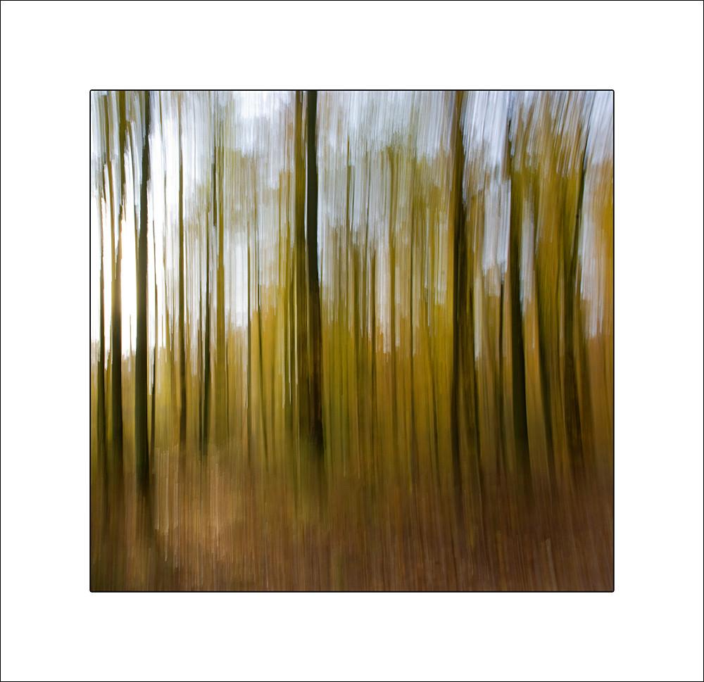 ...Wald im Herbst...