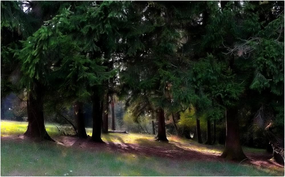 """Wald im Herbstlicht """"Reload"""""""