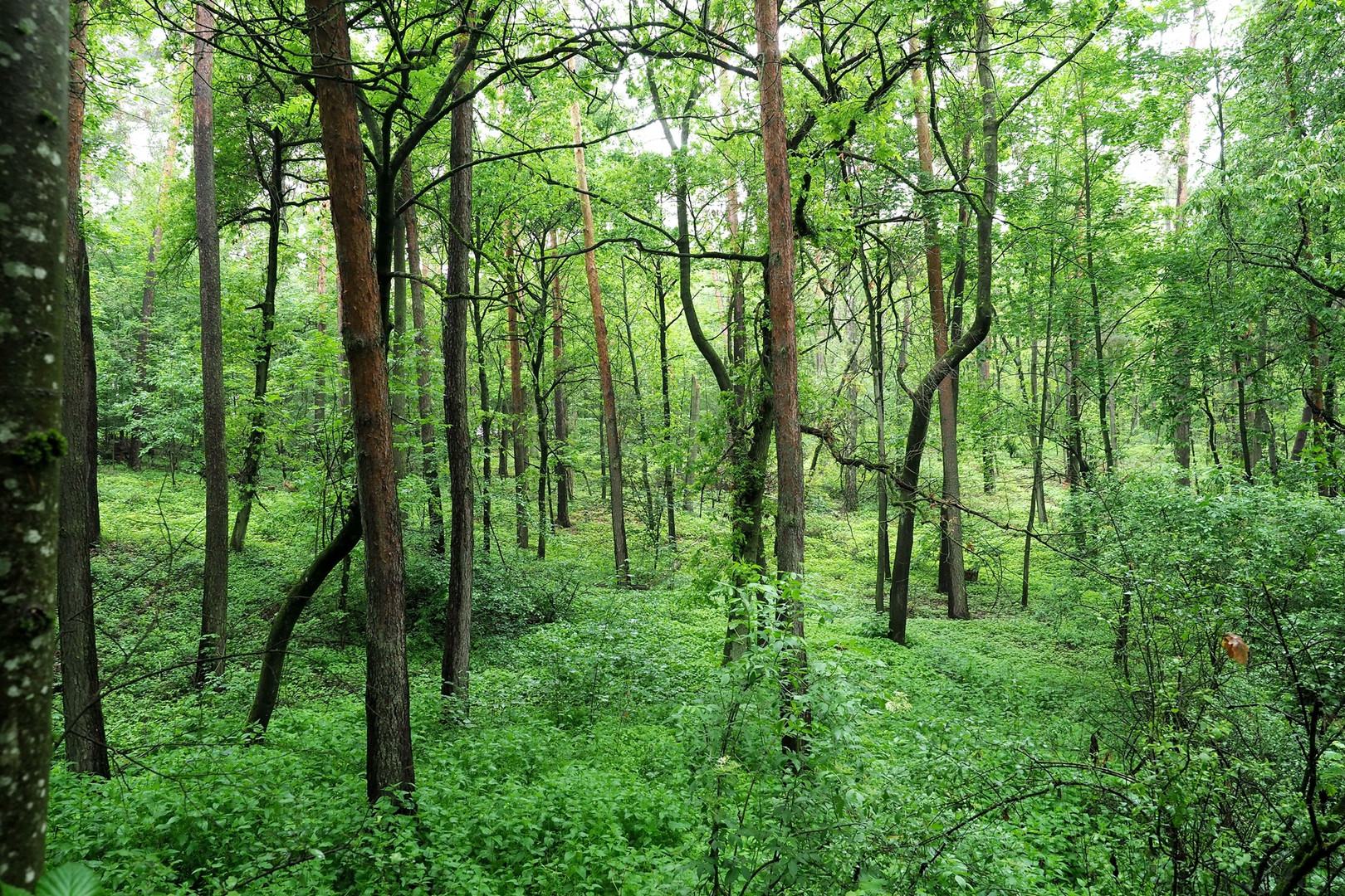 Wald im Regen = Regenwald ???