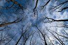 Wald im Vorfrühling