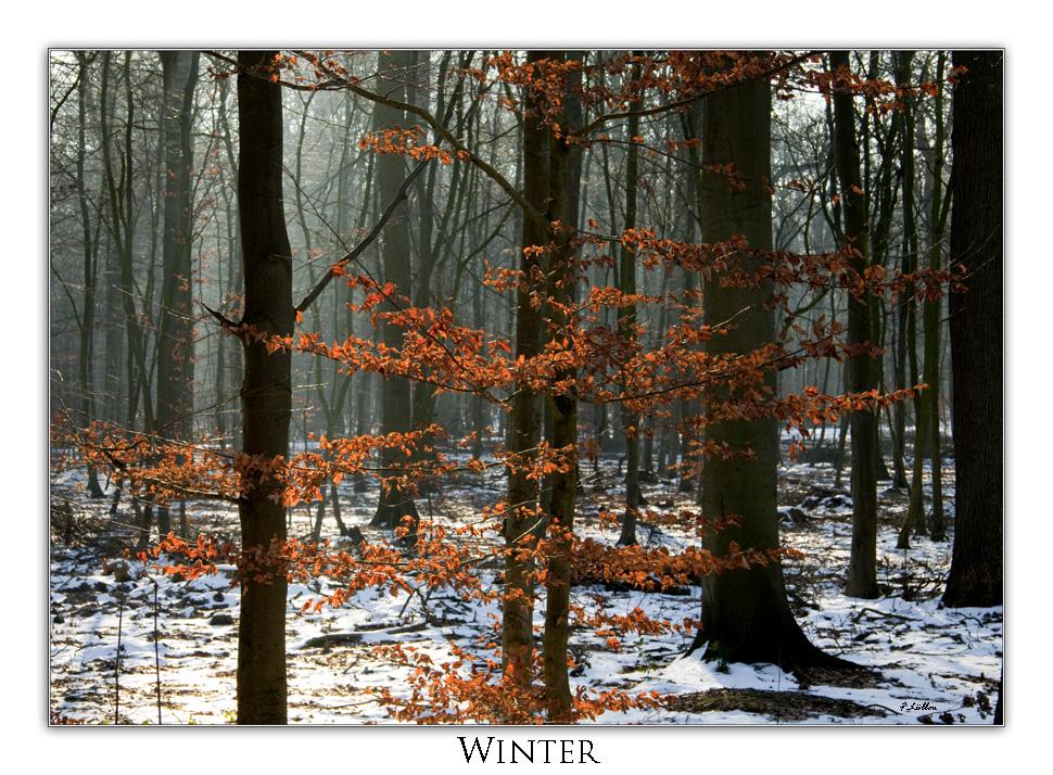 Wald Winter