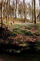 Wald Impressionen