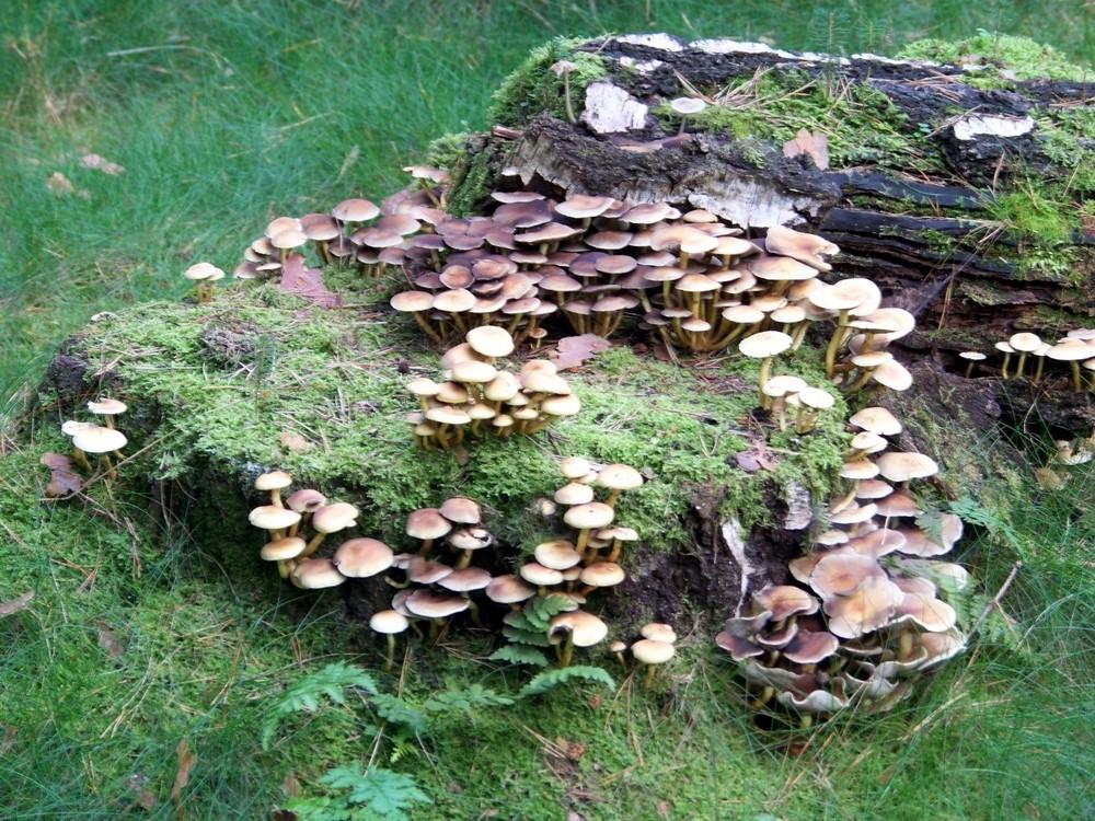 Wald - Impressionen