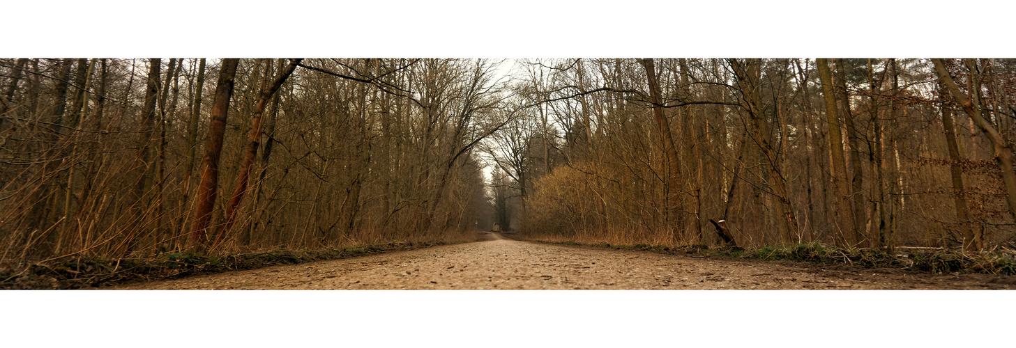Wald in Braunschweig