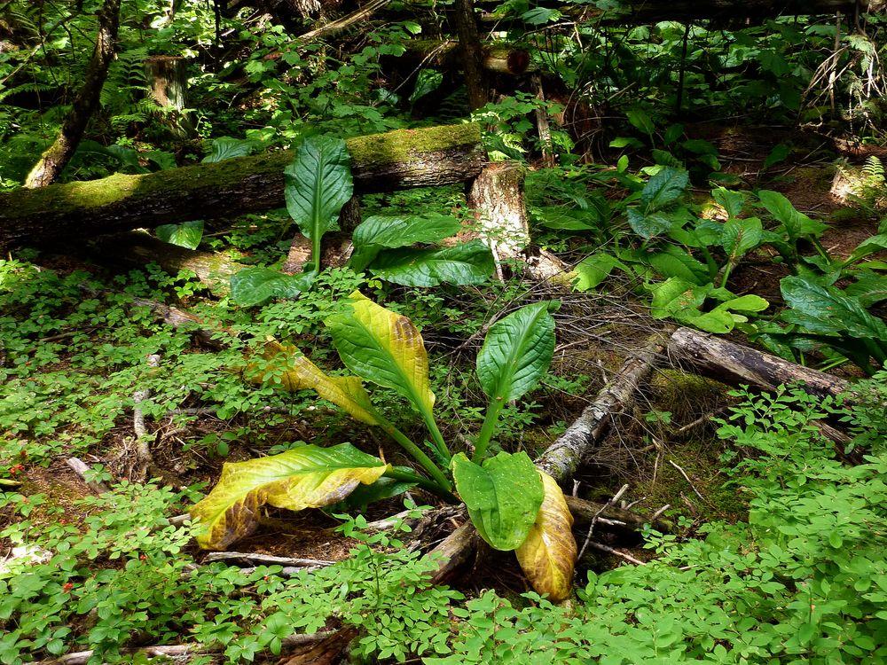 Wald - in der Nähe von Whistler in Kanada 1