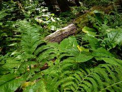 Wald - in der Nähe von Whistler in Kanada 2