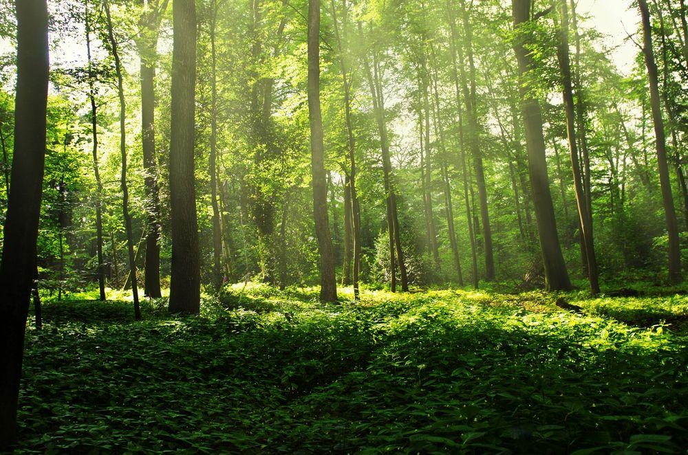 Wald in Hattingen