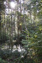 Wald in Herbstsonne