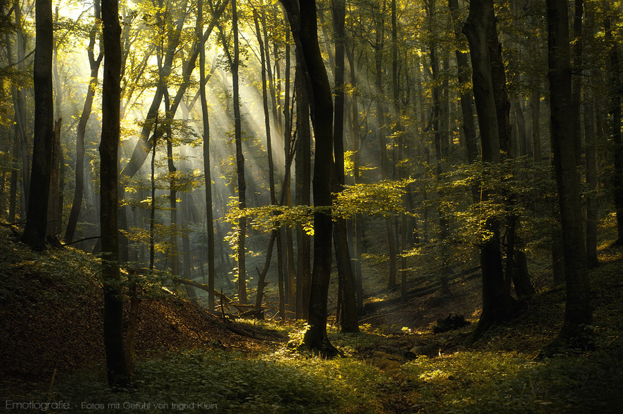 Wald in meinem Inneren