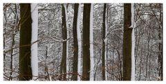 Wald in Merzhausen