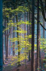 Wald-in-Oerlinghausen