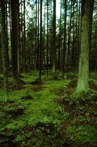 Wald IV