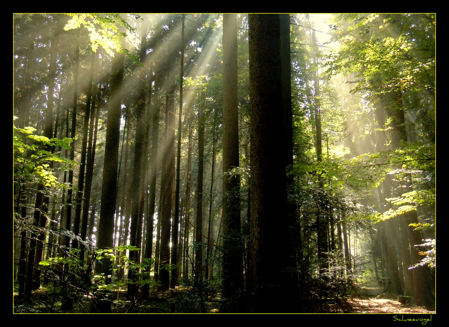 Wald-Kathedrale