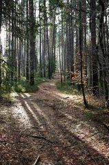 Wald Licht 1