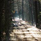 Wald Licht 2