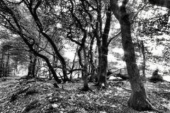 Wald | Lichter
