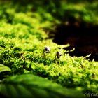 Wald Macros