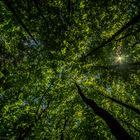 Wald mal anders