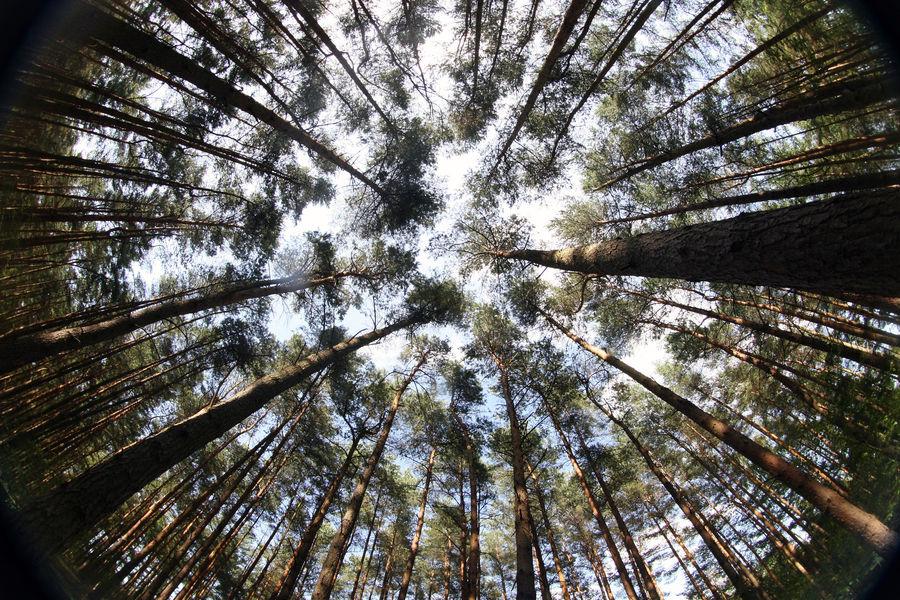 Wald mal etwas anders gesehen ...
