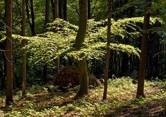 Wald mit frischem Grün im Sonnenlicht!