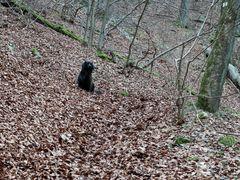 Wald mit Hund