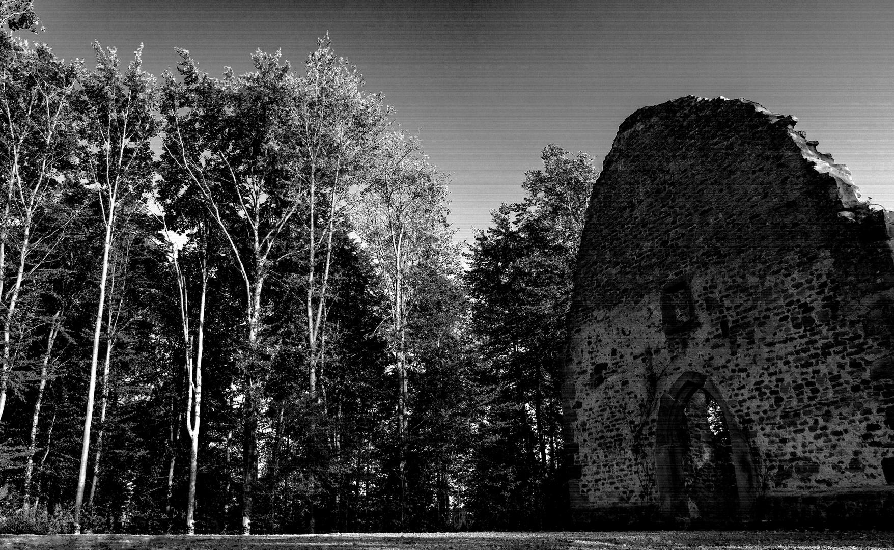 Wald mit Ruine