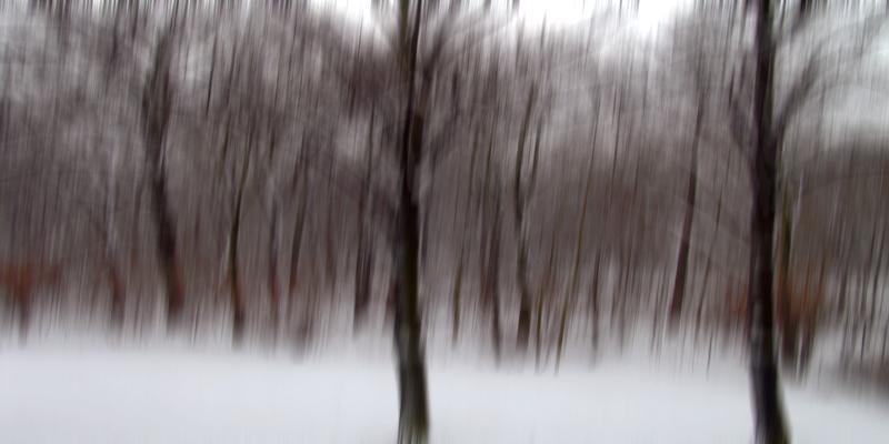 ::: wald mit schnee ohne kind :::