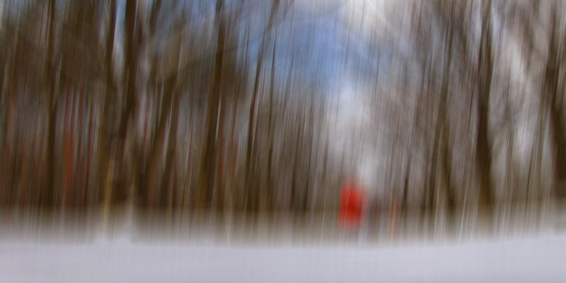 ::: wald mit schnee und kind :::