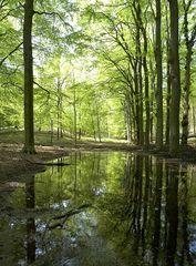Wald mit Sigma 14 mm