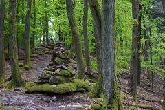 Wald mit Steinhaufen