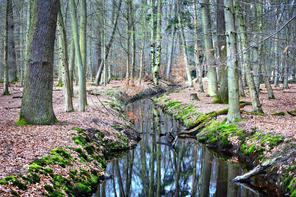 Wald mit Wasserlauf - Naturschutzgebiet Mönchbruch
