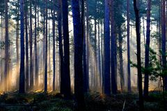 Wald , Nebel und Sonne