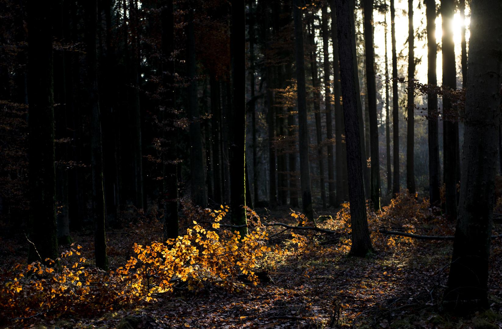 Wald neulich in Böblingen