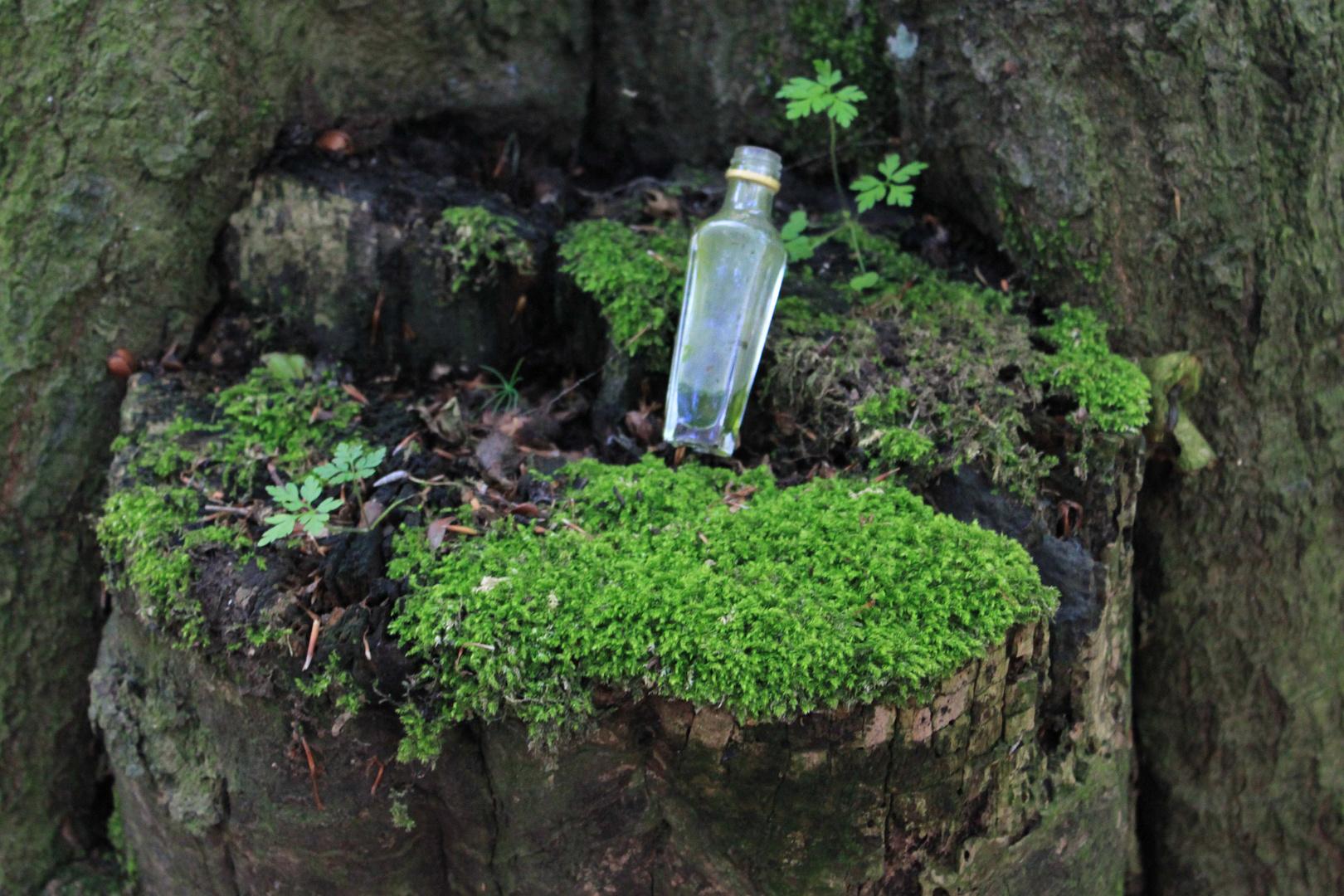 Wald oder Mülleimer?!