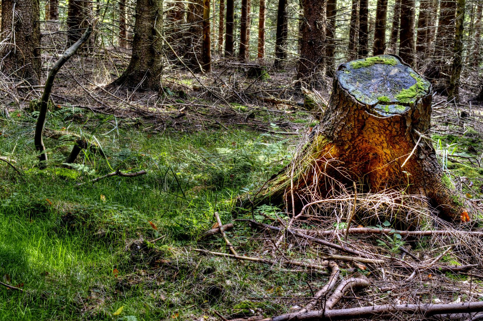 Wald ohne Trüffeln ?