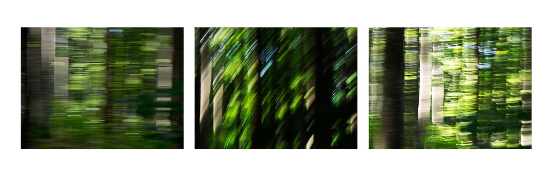 Wald - quer gewischt