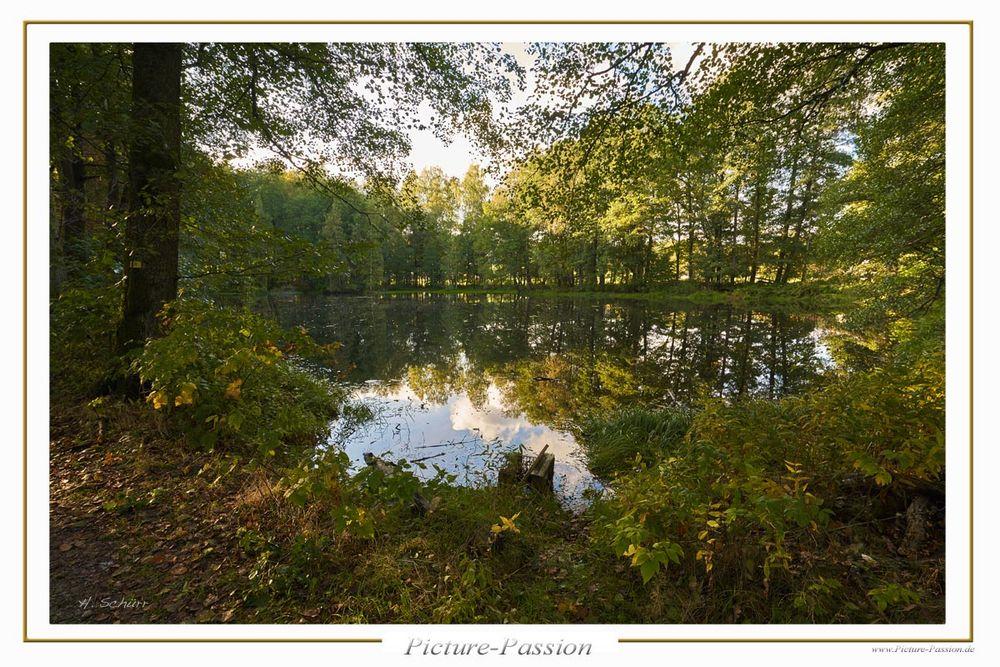 Wald See