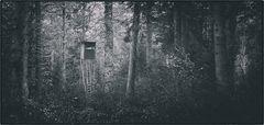 Wald - Sitz