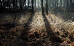 Wald, Sonne, Nebel, Niederrhein