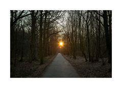 Wald-Sonnenaufgang