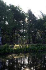 Wald-Spiegelung