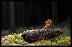 Wald-Stillleben