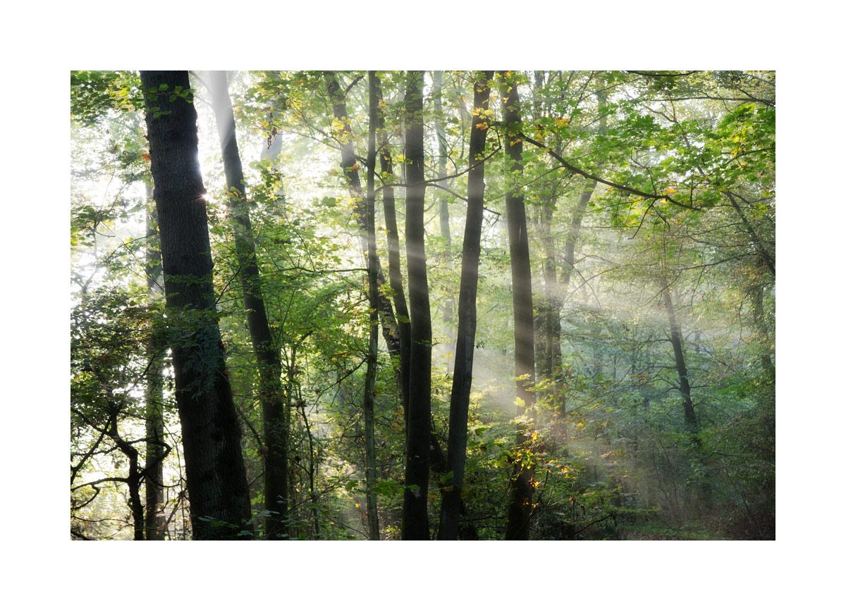 < Wald-Strahlen >