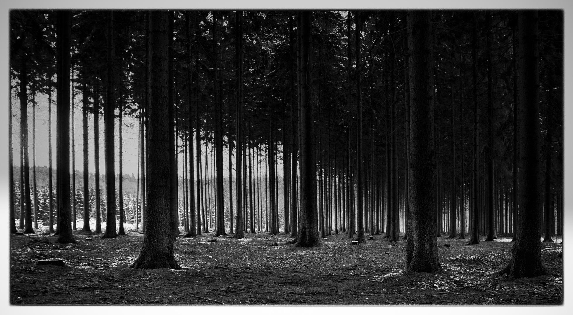 Wald s/w