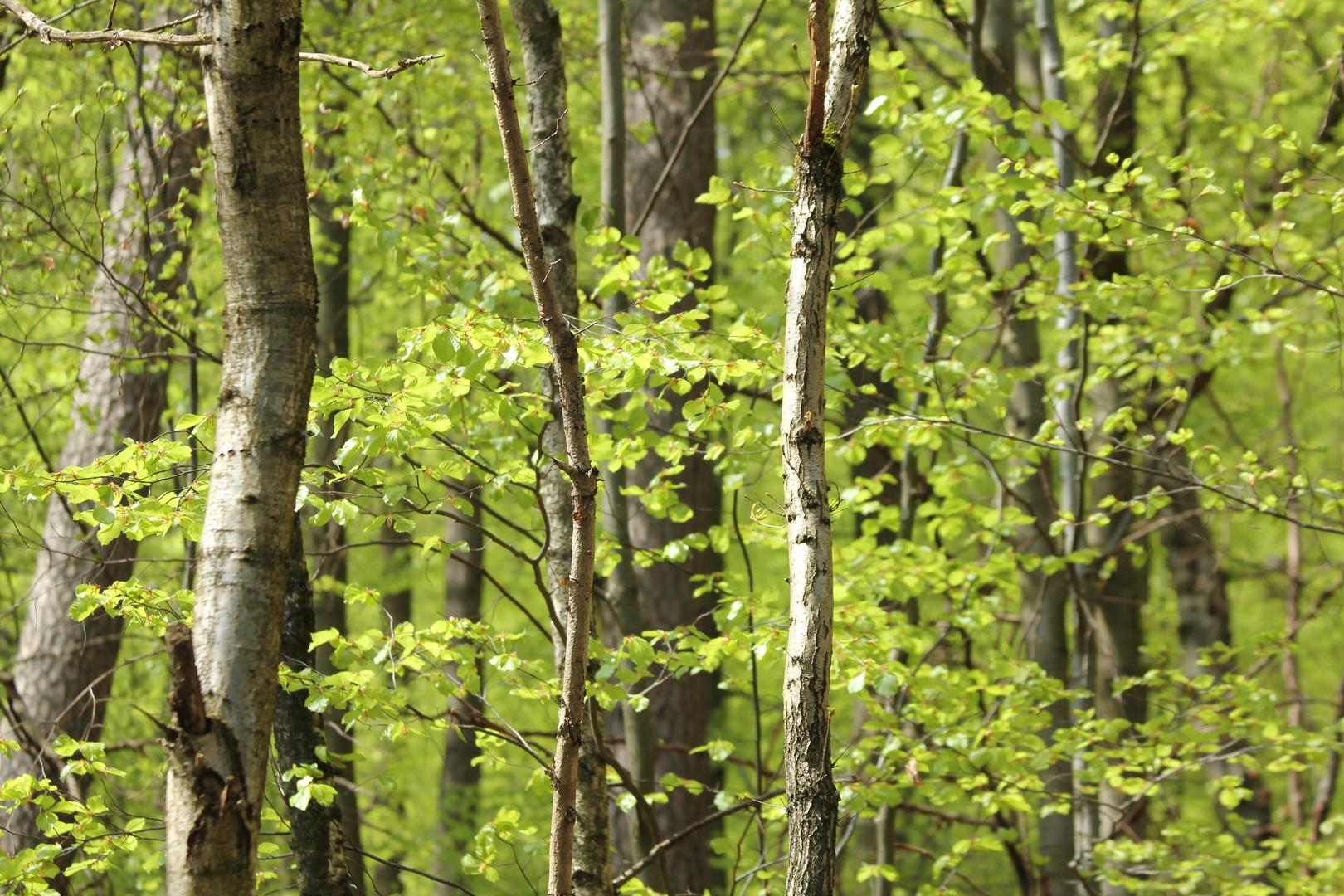 Wald Tapeten Geeignet Foto Bild Landschaft Wald Mixed
